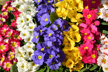 Colorful spring and summer floral background