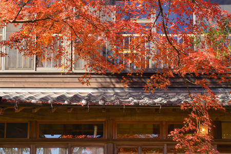 Maple tree with local building, Japan