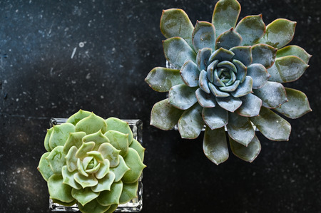 Succulent plants on black marble table from top view Stock fotó