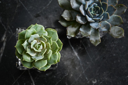 Succulent plants on black marble table from top view Stock Photo