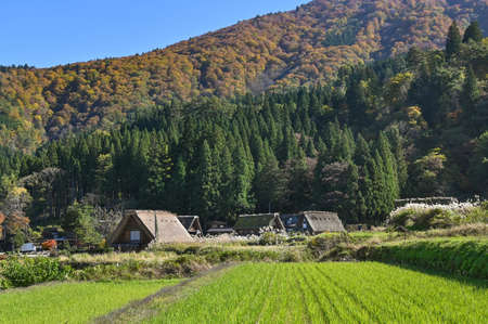 Gassho-zukuri farmhouse in autumn at  Shirakawa-go, Japan