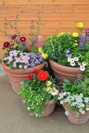 Spring background with colorful flowers in flower pots