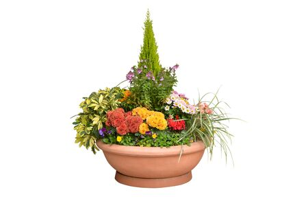 Variety of flower and plant in a pot on white background - isolated Zdjęcie Seryjne