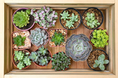 Variety of small succulents in a wooden box