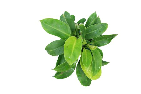 Top view of green leaves with white background. Stock Photo