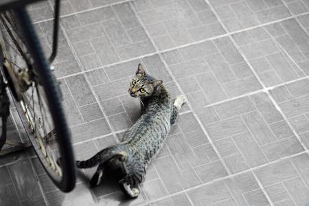 visually: Cats as pets at home,Visually attractive