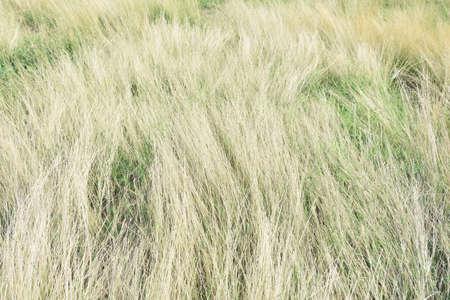 grasslands: Dry grasslands for use background