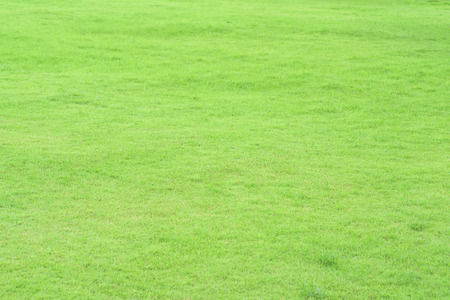 Green garden lawn outdoor in summer use for background. Stock Photo
