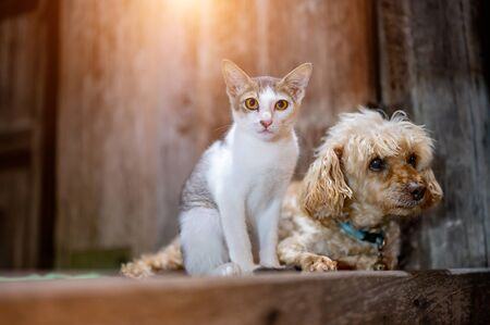 Dogs and cats sit together and staring forward. Zdjęcie Seryjne