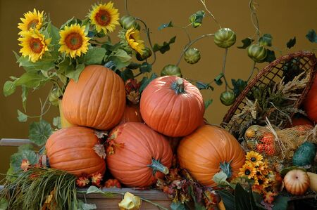 Pumpkins and sunflowers, harvest on