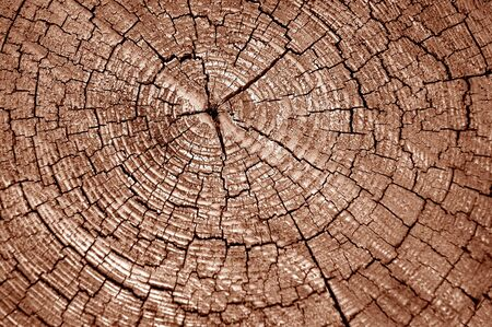 Tree stump background Stock Photo