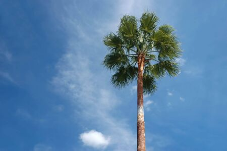 A lone palm tree in a blue sunny sky background
