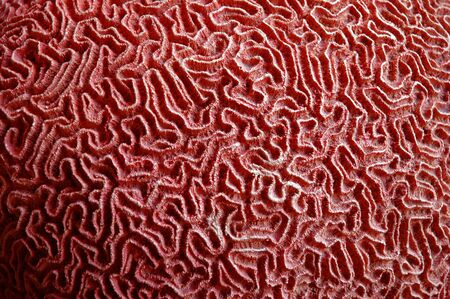 A close-up of a coral that looks like a labyrinth or maze