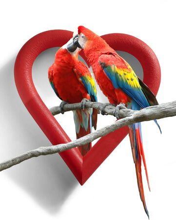 A couple of ing parrots with a heart-shaped frame as background