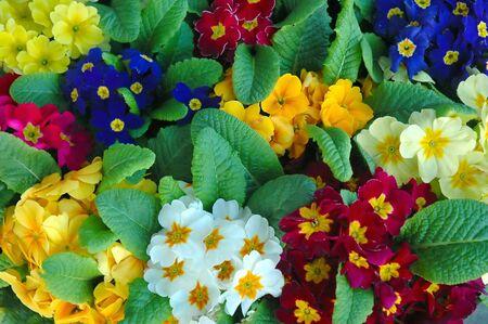 カラフルな春の花