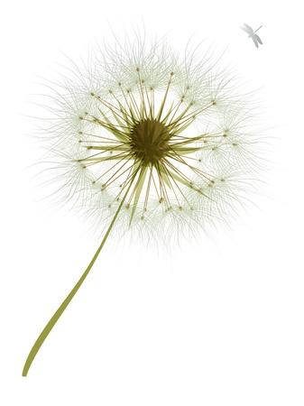 dekor: flower, garden, graphic