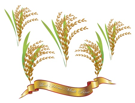 arrozal: Arroz blanco tailand�s