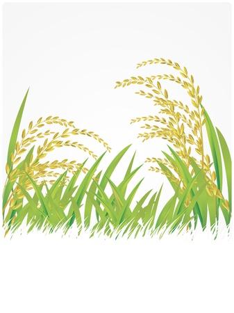 le riz, le thaï, Thaïlande, blanc, illustration, riz au jasmin