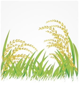 rice plant:  rice, thai, Thailand, white, illustration, Jasmine Rice