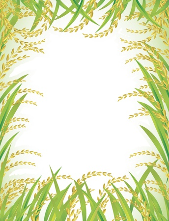 espigas: Marco y fondo de arroz tailand�s blanco. Vectores
