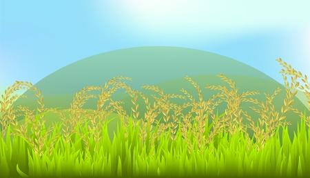 arrozal: arroz, tailand�s, Tailandia, blanco, ilustraci�n, Jasmine Rice