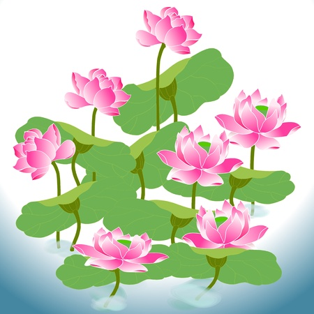 beautiful oriental lotus a flower in he field of water Vector