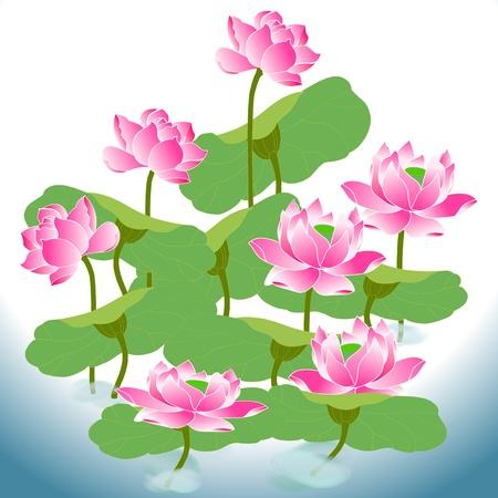 graine lotus: belle orientale de lotus une fleur dans domaine de l'eau, il