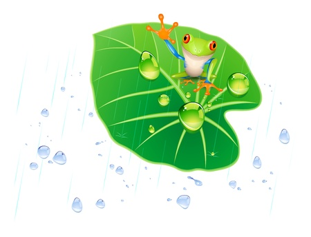 young leaf: frog on the lotus leaf in the rain.