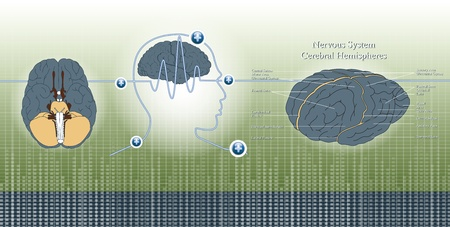 alpha: head and brain wave by brain on background illustration