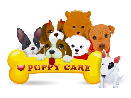 perro familia: ilustración de diferentes razas de perro y el hueso Vectores