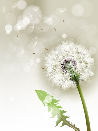 fertility: Vector Dandelion