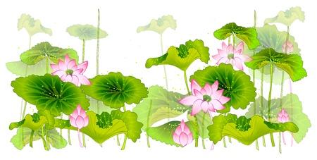 flor de loto: Flor de loto y hojas aisladas en blanco