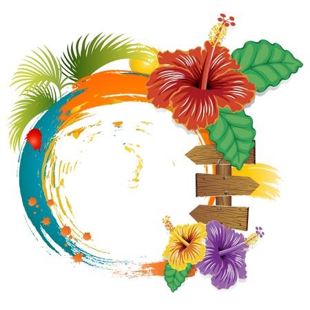 hibisco: Las flores del hibisco y el marco de verano sobre fondo blanco.