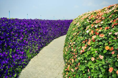 wall of petunia and wall of Impatien photo