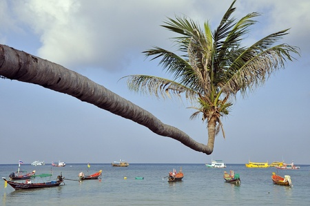 palm and longtail boats on Kho Tao island, Thailand photo