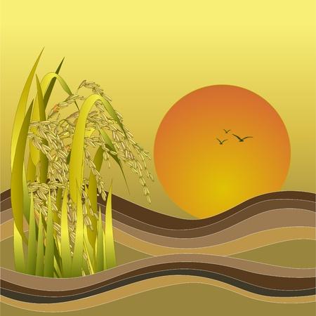 arrozal: El arroz de Tailandia con el r�o y el atardecer Vectores