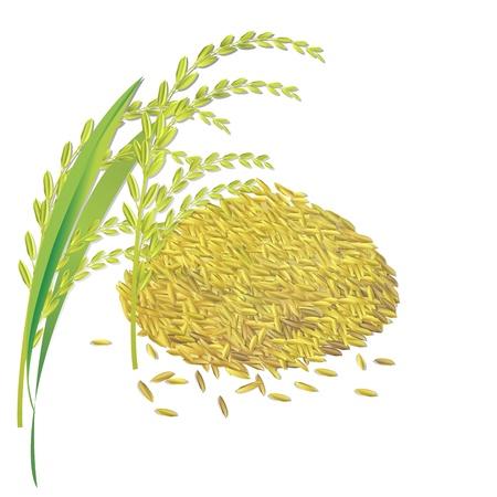 Rijstkorrel padie en blad, op wit