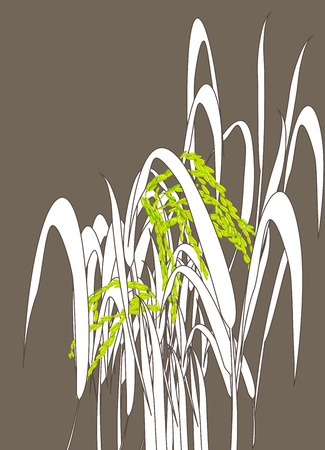 brown rice: Graphic work of rice grain paddy Illustration