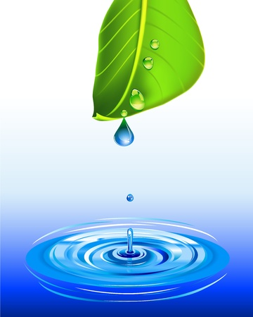 spring water: water or dew drop falling from a green leaf on water