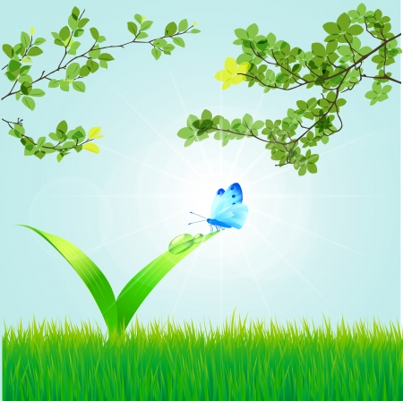 Spring background with a grass, leaves, dew, butterflie Vector