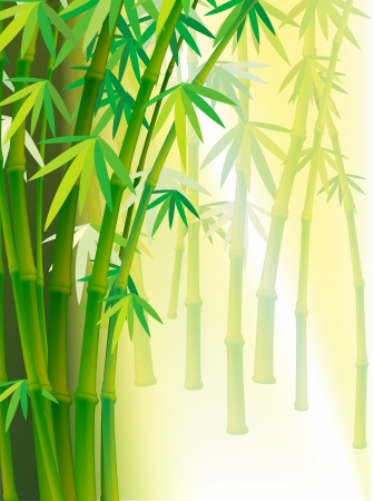 cultivating: Illustration Bamboo background with copy space