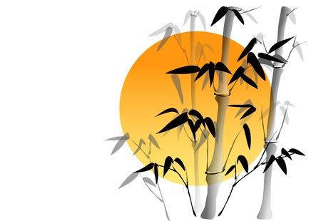 bamb�: Las ramas de un bamb� en el fondo blanco con el sol en la espalda