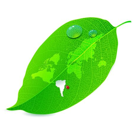 Close up a leaf with the world map Insect bite Stock Vector - 14698868