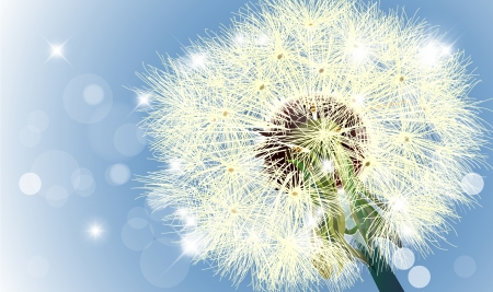 Macro shot of wild dandelion in sky whit bokeh