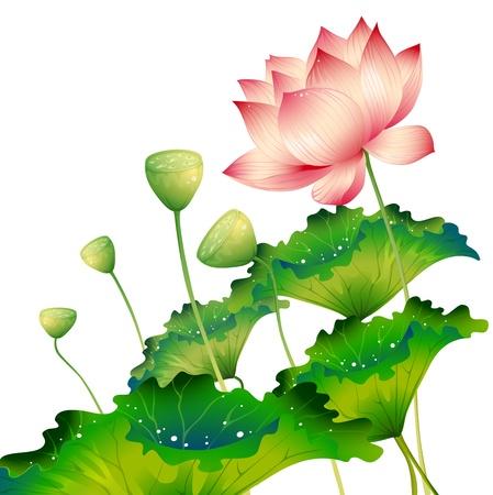 Oriental flor de loto aislada con hoja de loto