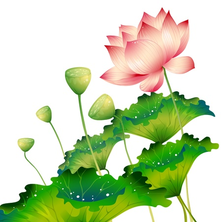 contemporary style: Oriental lotus flower isolated with lotus leaf