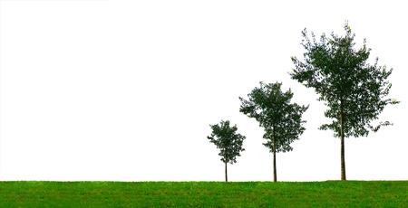 verhogen: Groei concept met drie groeiende bomen van verschillende grootte op een witte achtergrond Stockfoto