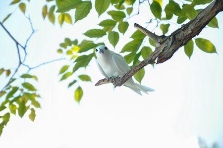 Oiseau de spirée blanc Banque d'images - 98173798
