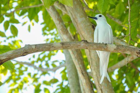 Blanc carex maldives Banque d'images - 98037624