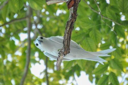 White tern on a branch